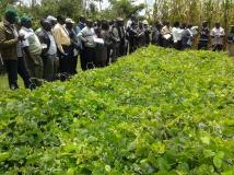 Kitale Field day session on Conservation Agrirculture